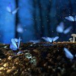 butterfly-2049567_640.jpg